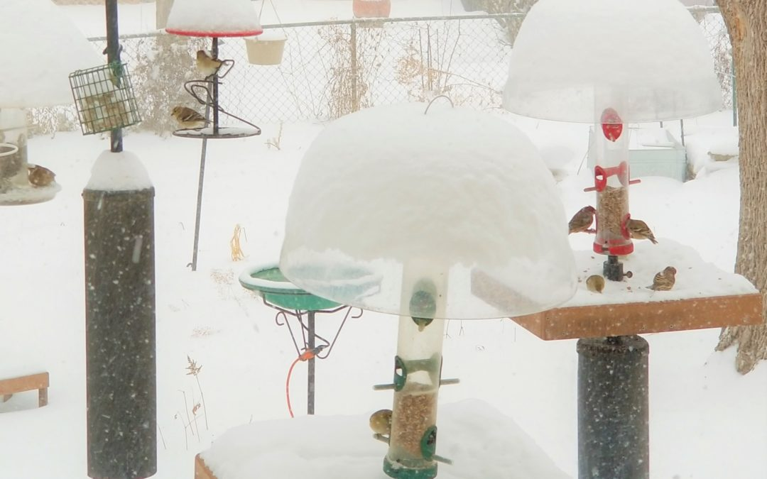 Would You Like To Get Started In Birdfeeding?