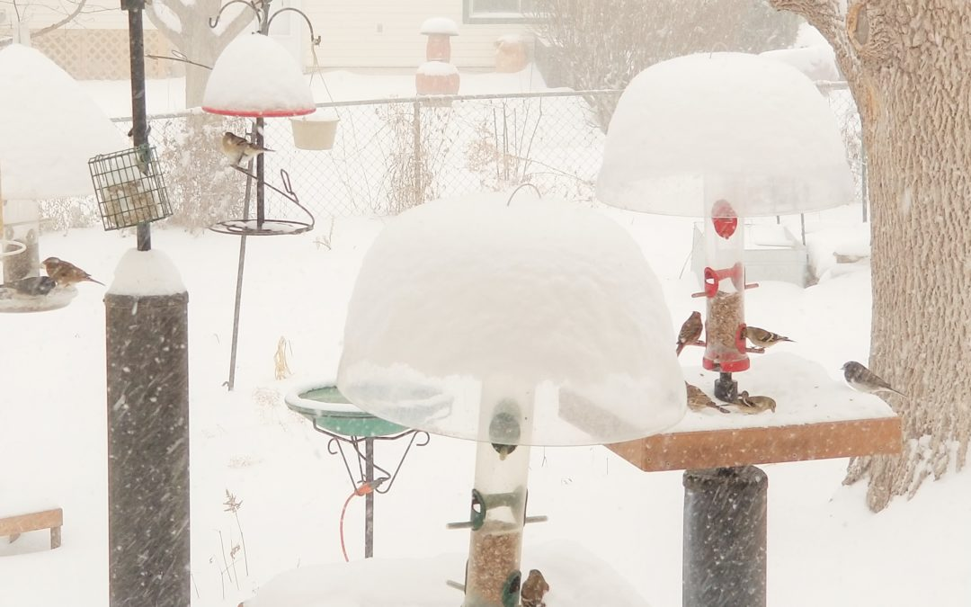 Help Birds Keep Warm This Winter