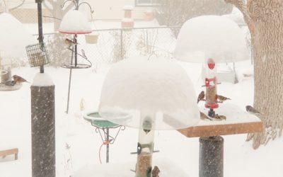 Help Birds Keep Warm This Winter