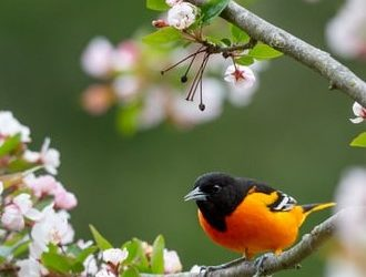 Summer Sojourners: Baltimore Orioles